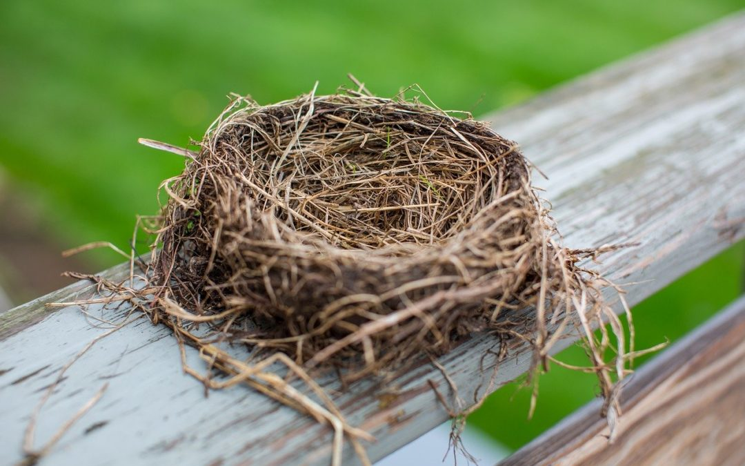 Organizing the Empty Nest!